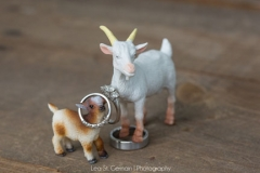 wedding rings , goats , farm , barn , jd designs , lea st germain photography , nh wedding , rustic , kitz farm , pastel , gray